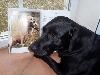 Unterricht für Labradore