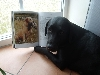 Labrador beim Lesen
