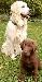 hundefreundschaften.jpg
