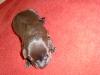 05-labrador-welpe-bijan.jpg