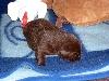 Cirrus ahmt das Huhn nach