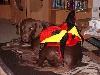 Der WM Hund