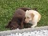 Bonny und Angel beim Kuscheln