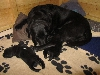 08-schwarze-uromi-mit-ihren-schwarzen-urenkeln.jpg