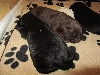 12-schwarz-braun-schwarz.jpg