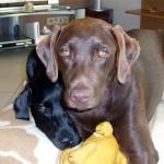 Roxy und Angel