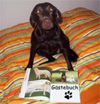 Labrador beim Lesen des Gästebuchs